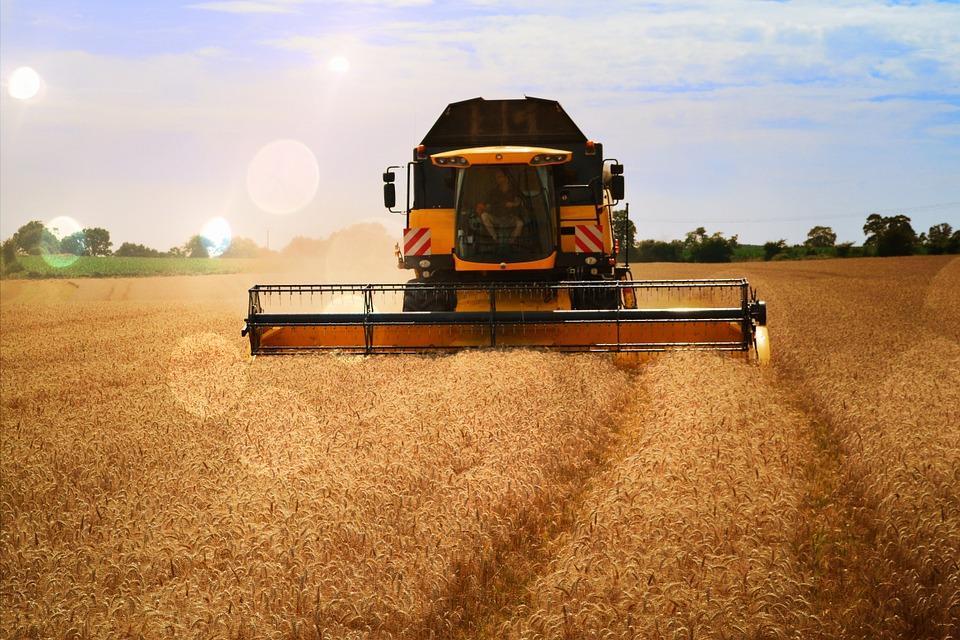 La France perd son rang de premier exportateur de blé…