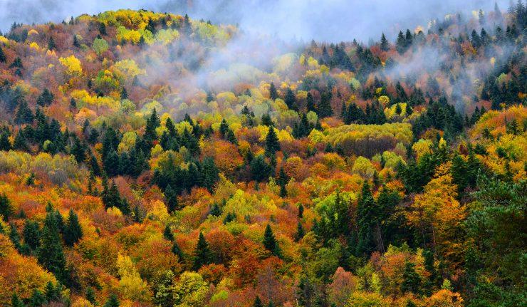 Bulgarie forêt programme Natura 2000