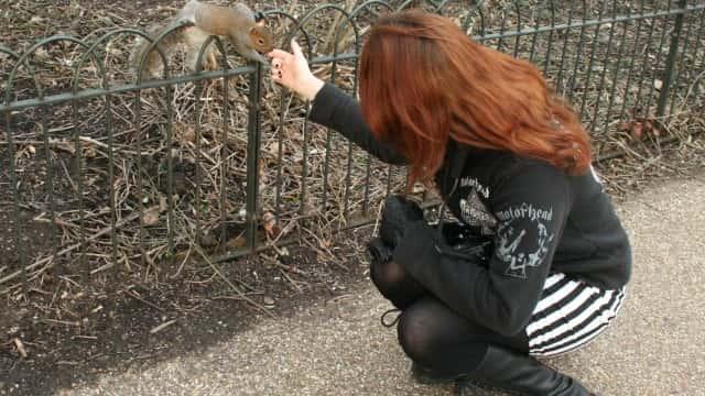 Les célèbres écureuils de Hyde Park.