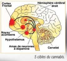 5 cibles cannabis