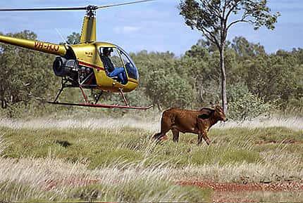 Fermiers Australiens