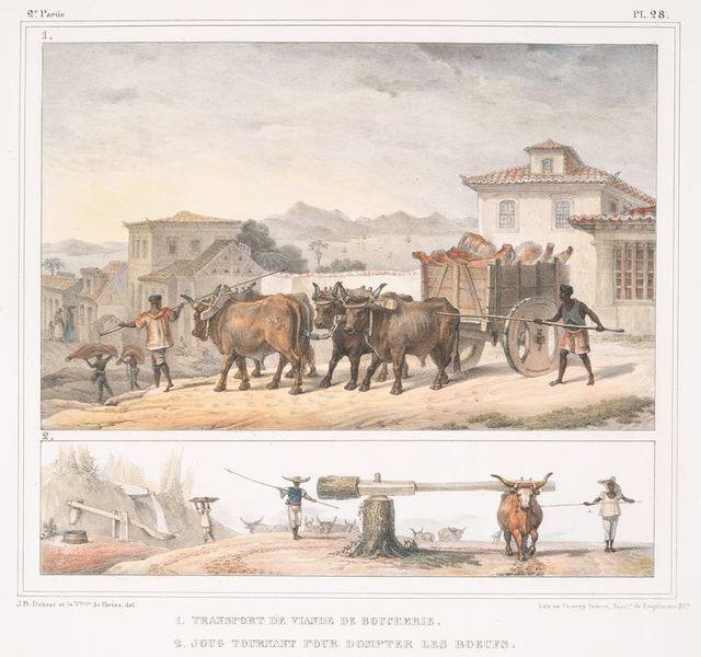 Transport de viande de boucherie ; Joug tournant pour dompter des boeufs.